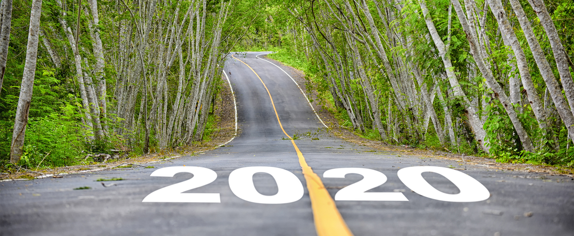 Road with trees and 2020 painted on road